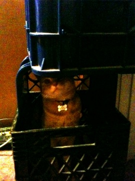Buster in crates
