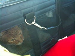 Buster in carrier