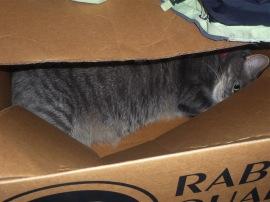 Nikkyo in box