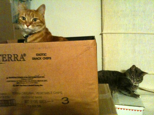 Buster and Nikkyo on the boxes