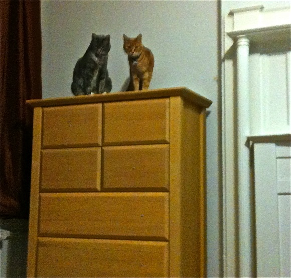 Nikkyo and Buster on dresser