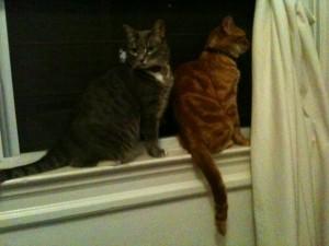 Nikkyo & Buster in office window