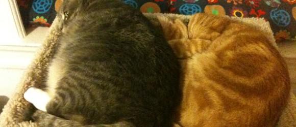 Nikkyo & Buster